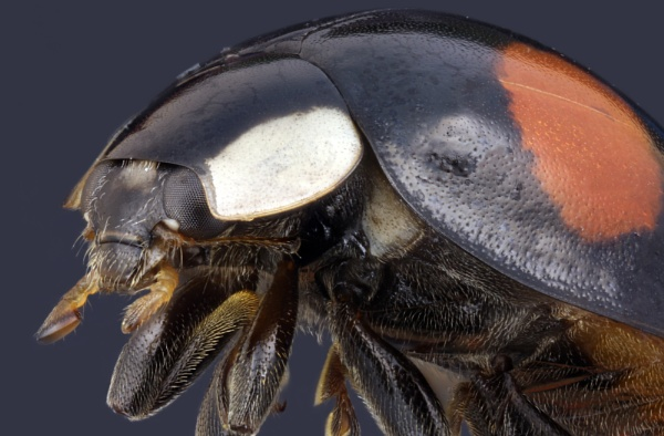 Bug by stu8fish
