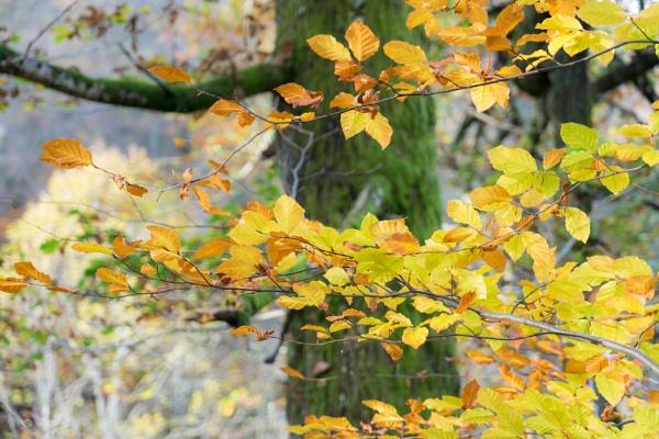 Birks... by Scottishlandscapes