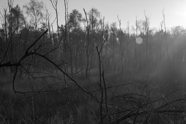 Burnt trees by Teaka53
