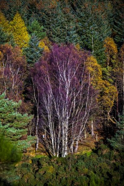 The tree by Benjito