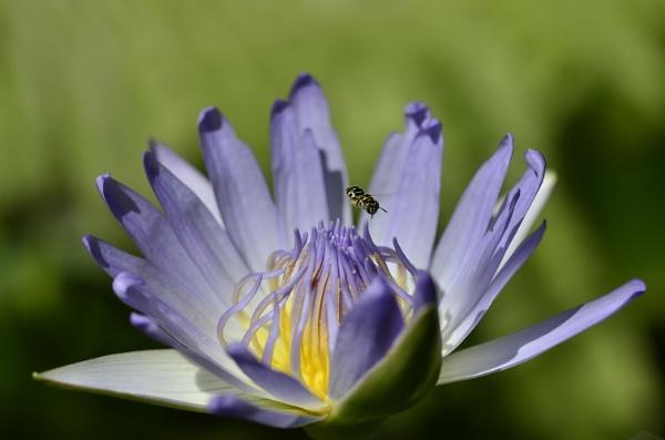 find a polen by Maisarah