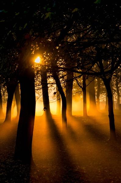 Misty November Dawn by Loudon