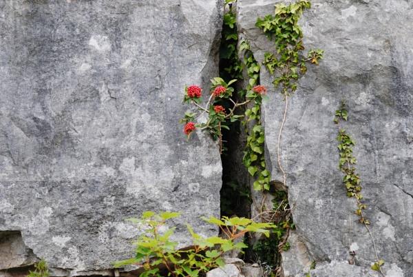 Rock gardens! by Chinga