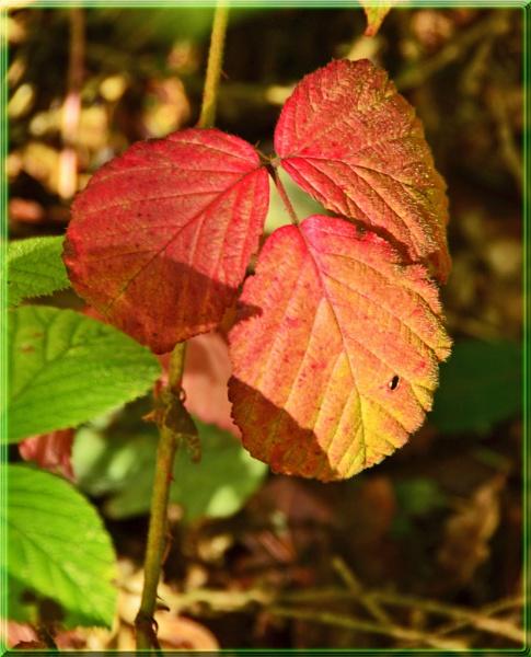 autumn colours by Margaret101