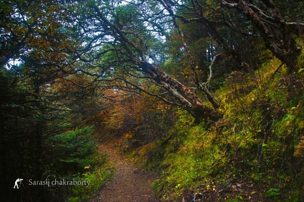 way to forest by sarasij