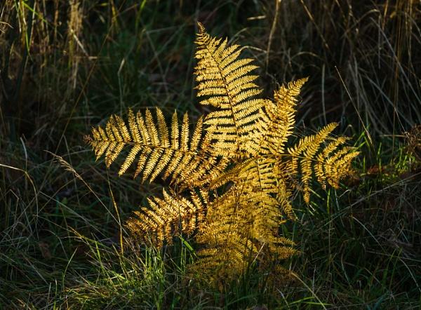 Golden Sunbeam... by Scottishlandscapes