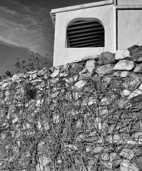 Casa wall and vines. by bobinspain