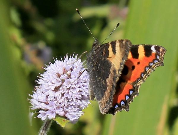 Butterfly on flower by debbiegee