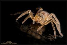 Wet Spiderling
