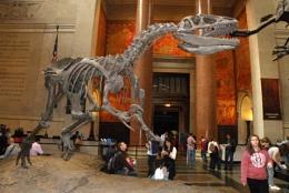 Natural History Museum (USA)