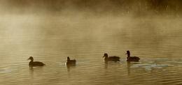 Misty Meeting