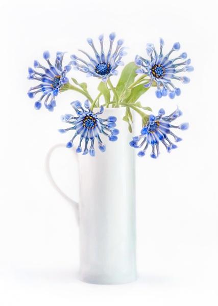 Spoon flowers by MandyD
