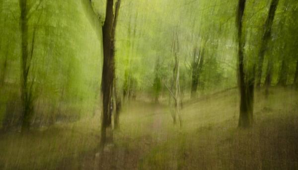 spring woodlands by wynn469