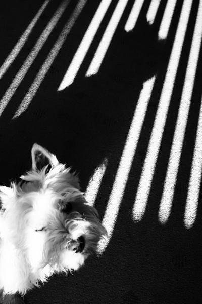 Shadow by gowebgo