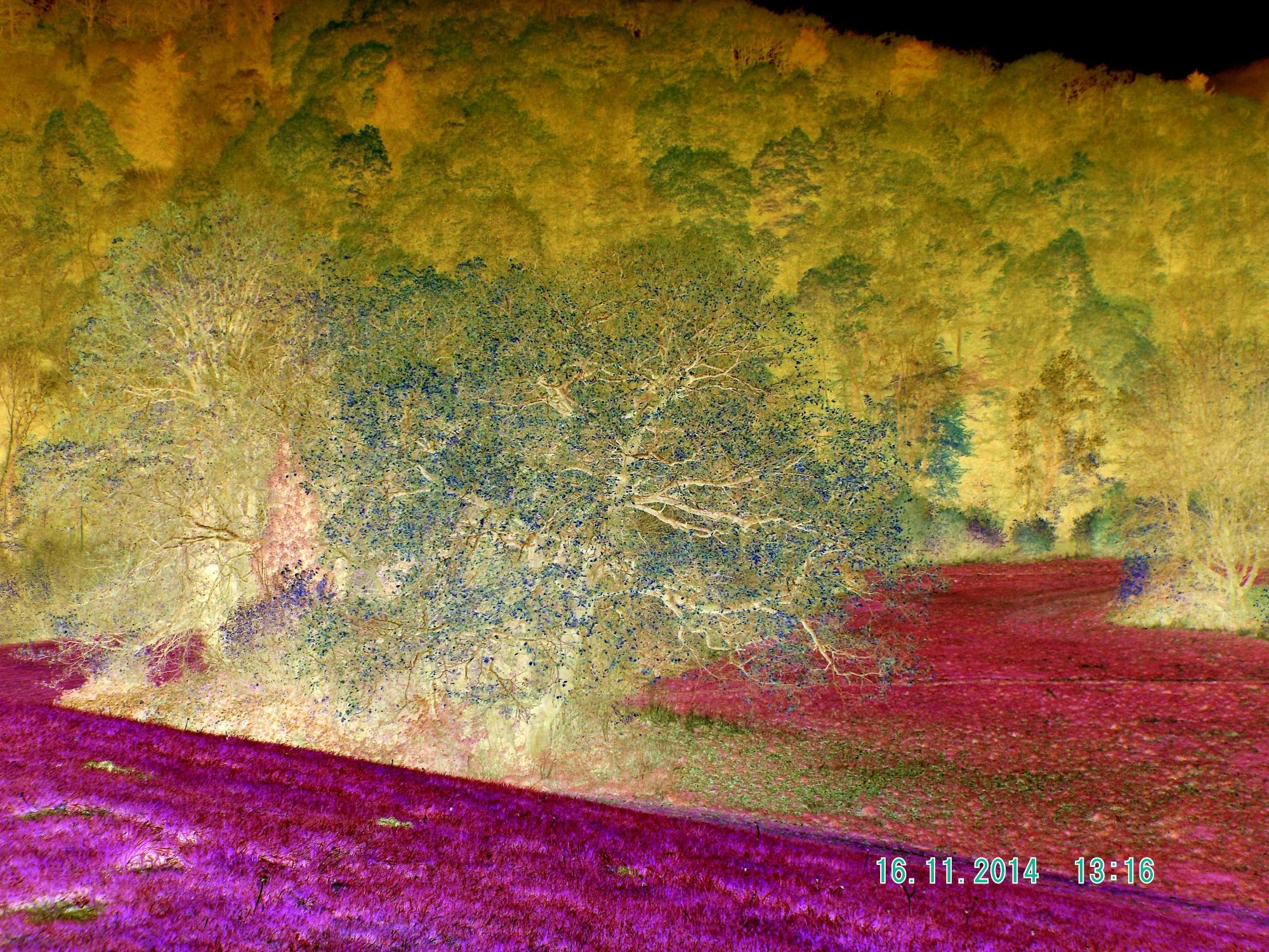 Autumm tree art