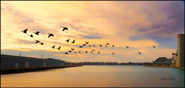 Evening Flight by doerthe