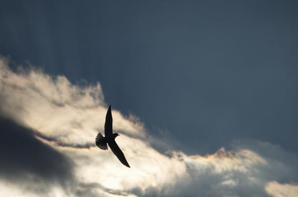 Seagull by ttokac