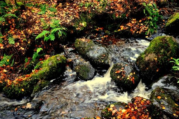 autumn glory by ernestdonal79