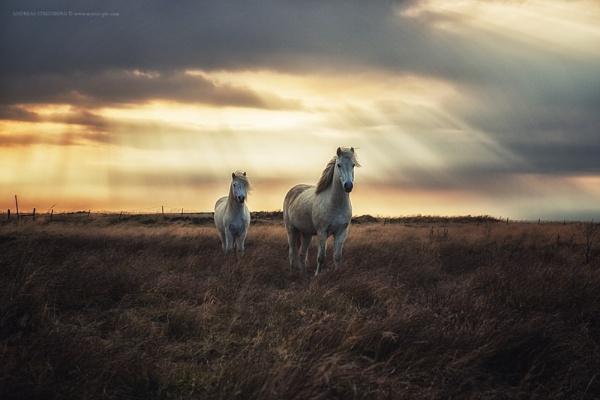 Hornless Unicorn by A_Stridsberg