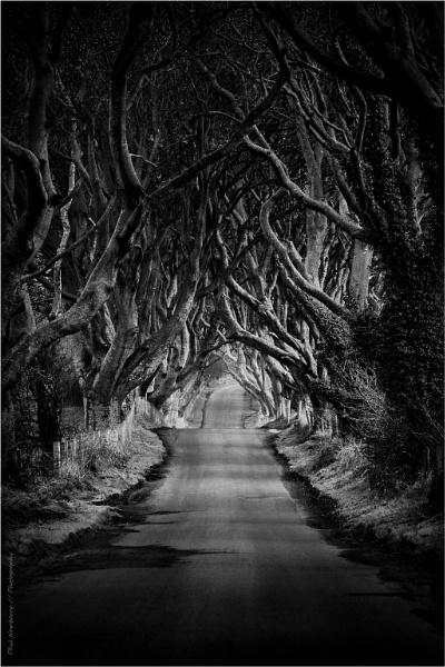 Dark Hedges - Study I by PhilNewberry
