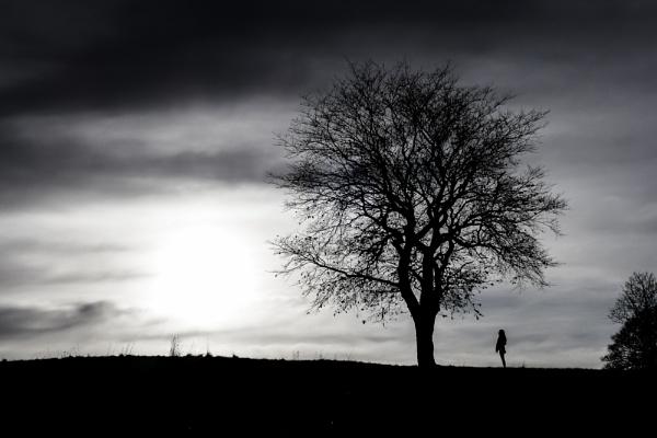 Tree by Osool
