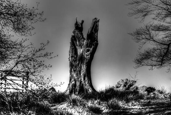 Tree by johnlwadd