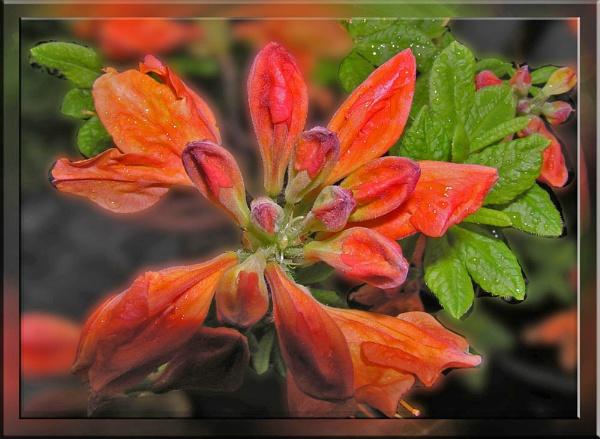 Flora by cjl47