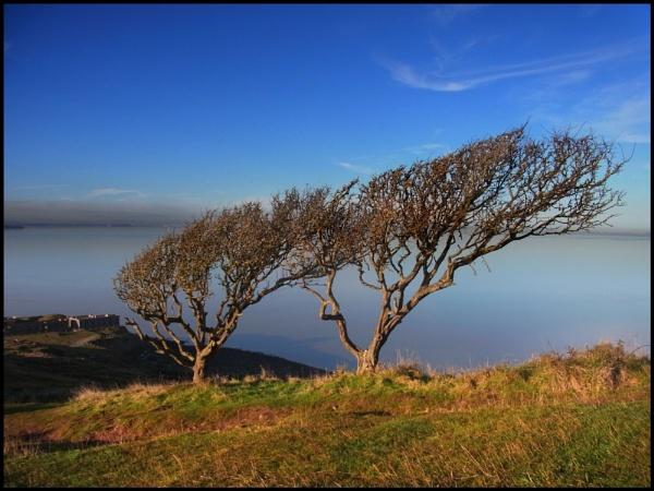 Wind Swept in Autumn by bwlchmawr