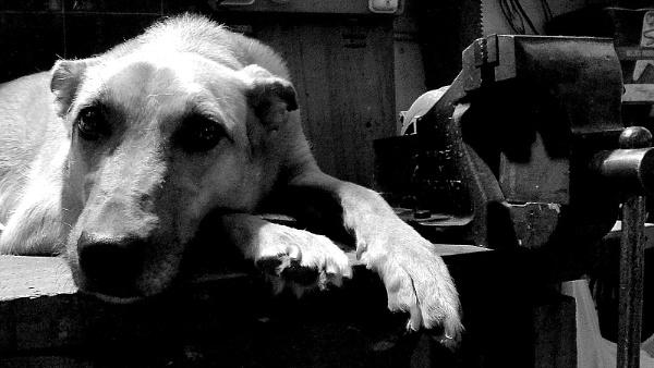 La perra y la morsa (the dog and the vise) by mtorighelli