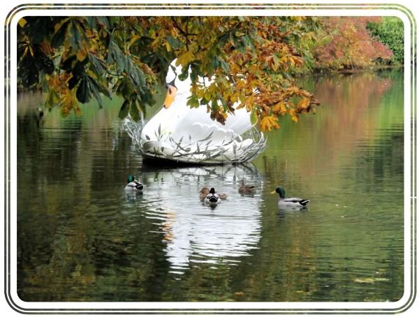 Swan by alancharlton