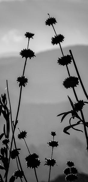 Buckwheat by mdconnors