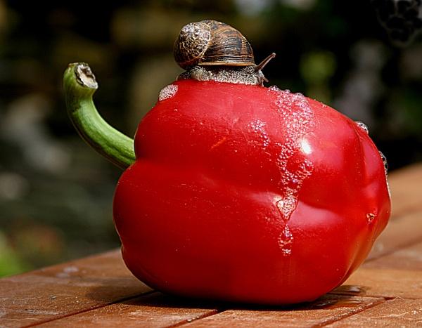 Snail by colinbond987