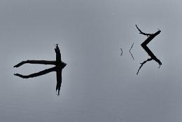 Ranthambore Reflection, India