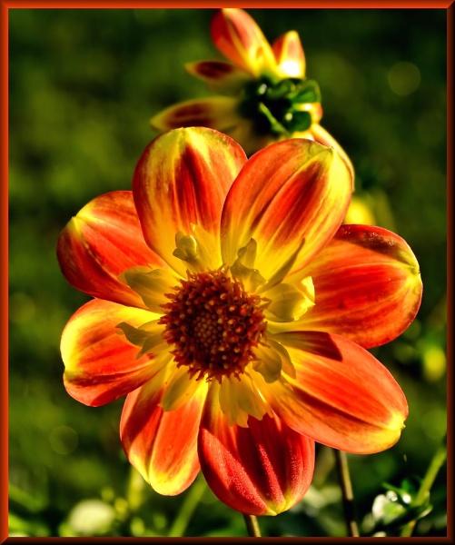 Garden Blooms by Rock