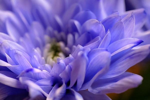 Blue by debbiegee