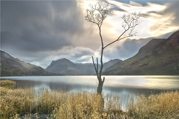 The Lone Tree, Buttermere by phil99