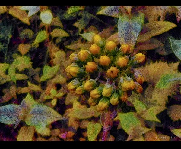 Soft garden by HPalin