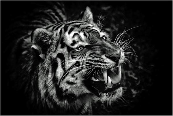 Grrrrrr by RWPhotoGraphix