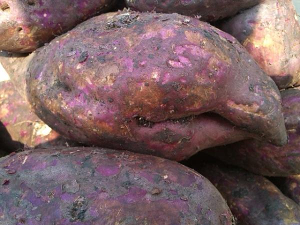 Sweet Potato by kinkhab