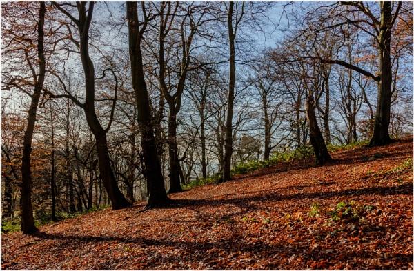Ridgehill Wood, Kingswinford by DicksPics