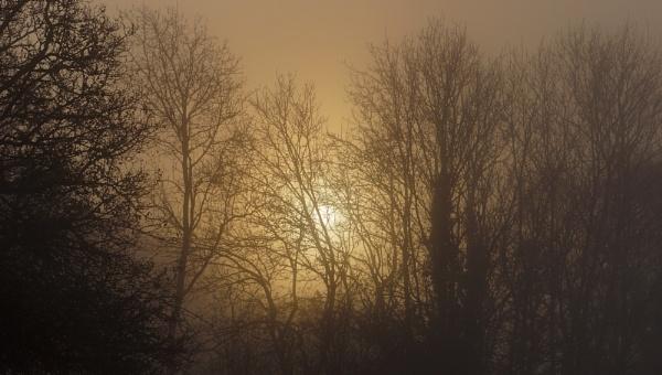 Foggy Forest Sunrise by jon gopsill