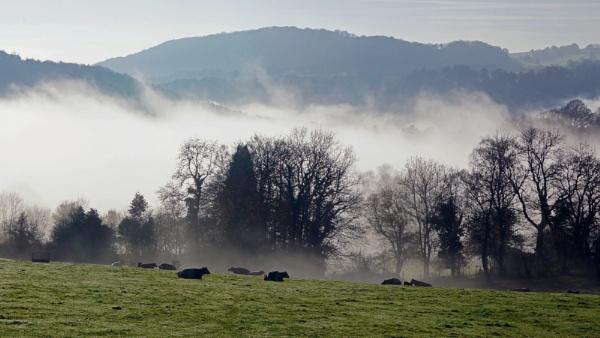 Foggy Morning by jon gopsill