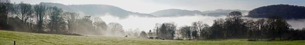 Cows in the Mist by jon gopsill