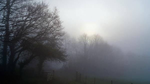 Foggy Trees by jon gopsill