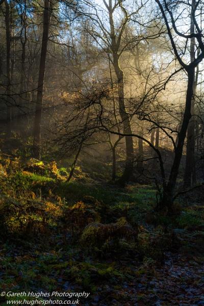 Early morning light by gazza77