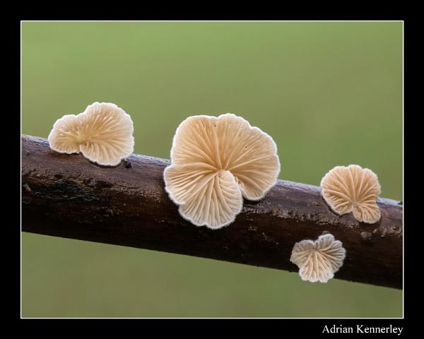 Fungi 2014 No  18 by tomcat