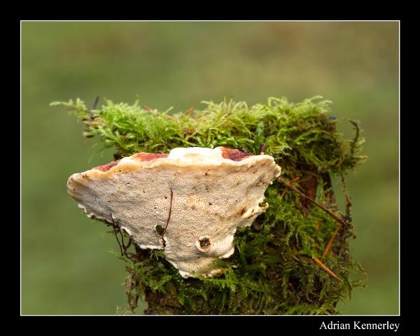 Fungi 2014 No 20 by tomcat