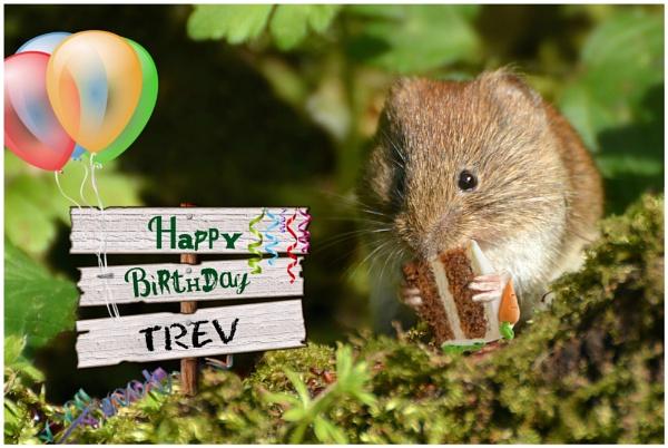 Happy Birthday Trev by Jenny-D