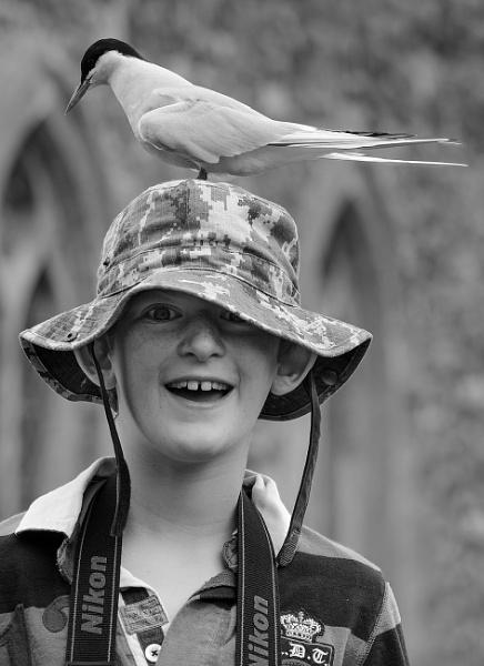 Head Tern by Nigeve1