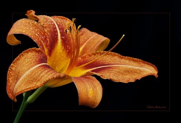 Floral Portrait by boran